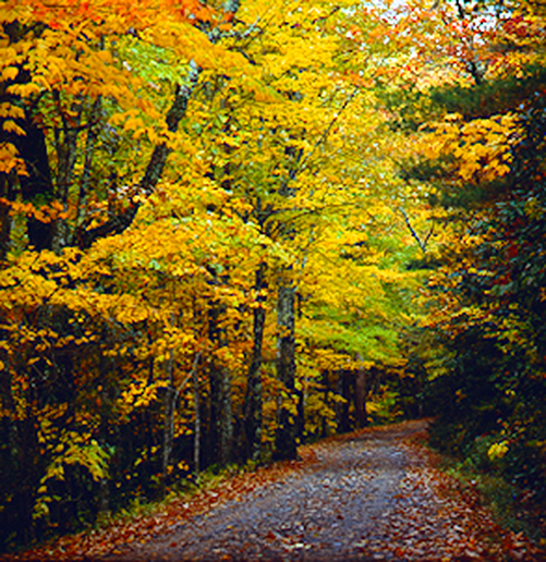 Fall tree lined road Cades Cove Great Smoky Mountains Tennessee photography