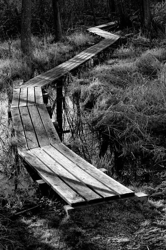 Boardwalk at Brown's Lake Bog