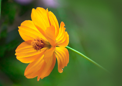 Yellow flower pictures