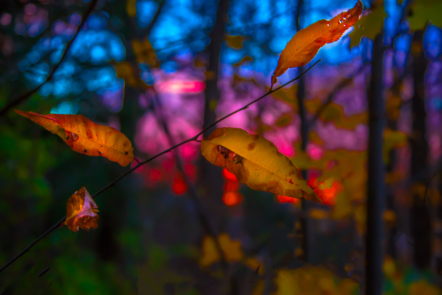 Fall Scenery - Orange Leaves with Teal and Pink Sunset in the Background