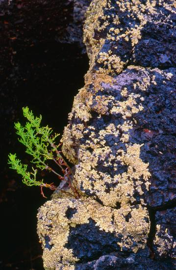 Green Sprig Sprouts in Black Volcanic Stone in Washington