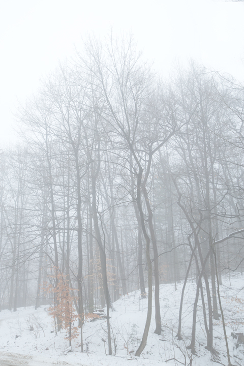 Winter Trees and Fog