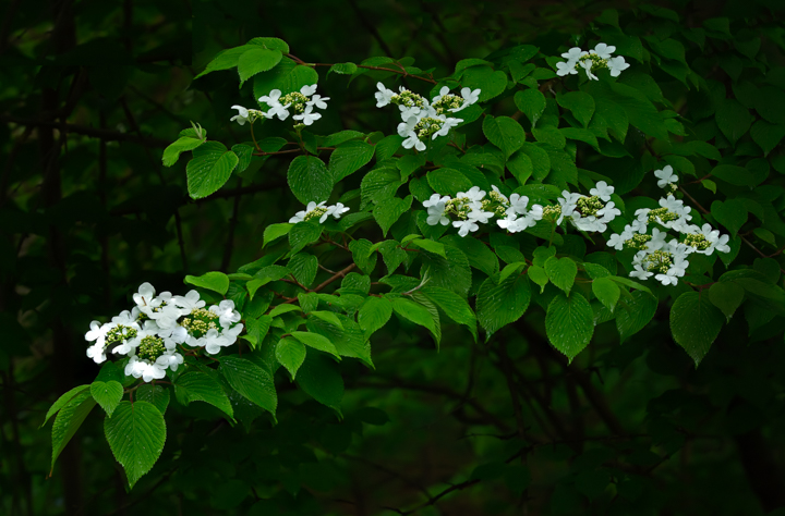 White flower tree branch