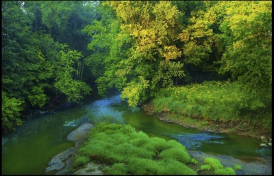 Green Killbuck Creek in the summer time