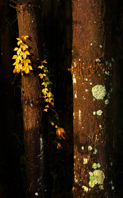 Yellow and Green Lichen Growing on a Tree Trunk