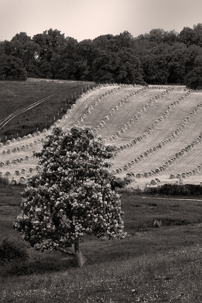 Ohio farmland landscape photography sepia