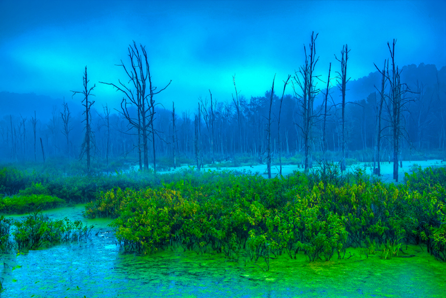 Blue and Green Fog at Killbuck Marsh in Ohio Nature Photography