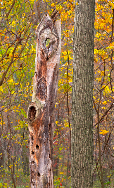 Fall Scenery Tree Trunks