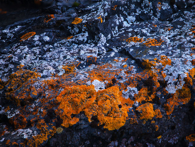Orange Sunburst Lichen in Marquette, Michigan