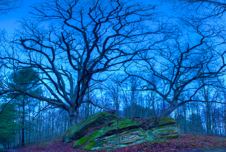 Craggy Mysterious Trees at Dusk