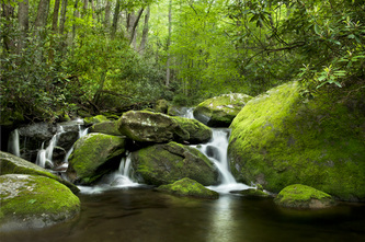 Gatlinburg, Tennessee nature photography