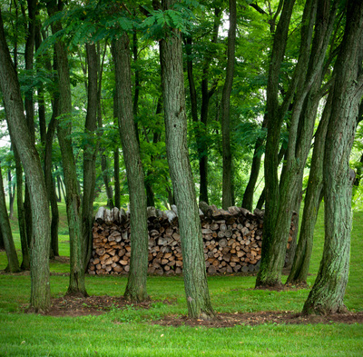 Stack of wood behind a row of trees