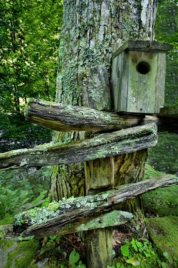 Rustic Birdhouse in Troutsong, North Carolina
