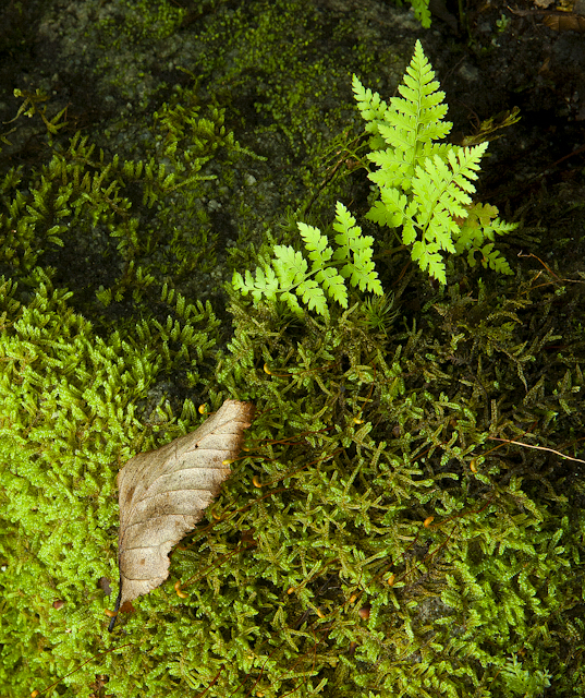 Green Fern Nature Photography