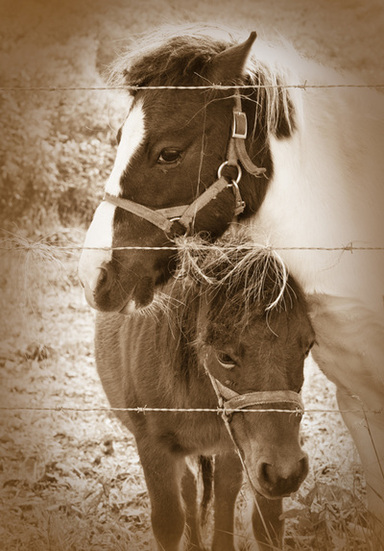 Mother and Foal Horse Photography