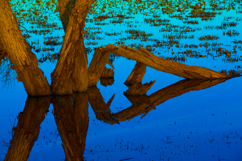 Glowing Wooden Tree Trunks in a Teal Reflecting Pond