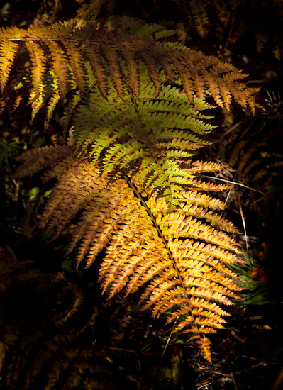 Photography of Orange Ferns in the Fall