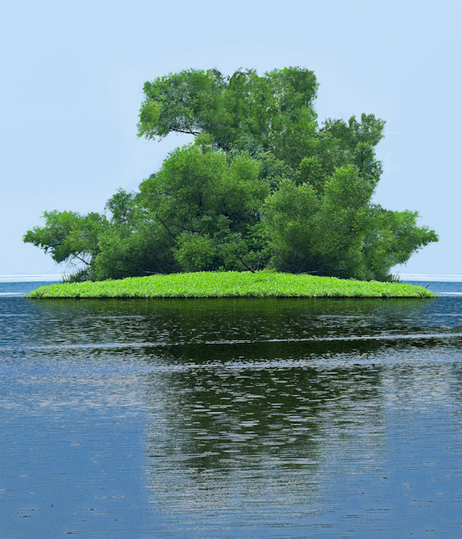 Small Green Tree Island in a Lake