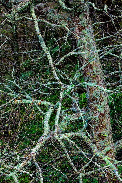 Branches covered in lichens in Boone, North Carolina