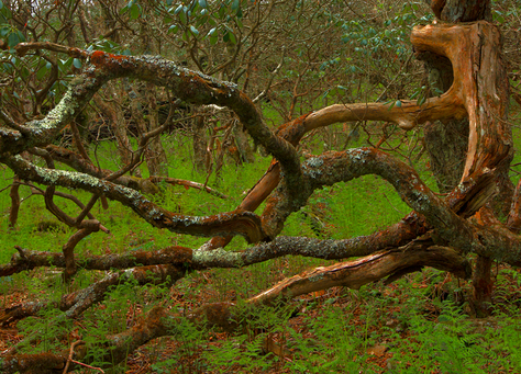 Mangled Tree Branches at Craggy Garden, North Carolina