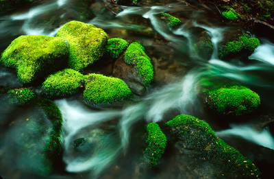 Nature photography of water and mossy rocks in the Smoky Mountains