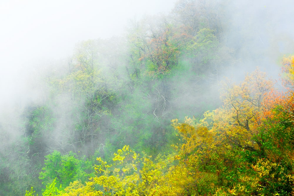 Mist Racing Up Newfound Gap The Great Smoky Mountains National Park Tennessee