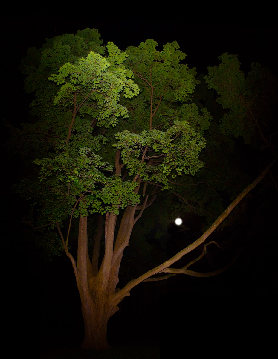 Tree and Moon at Night in Pendle Hill Pennsylvania
