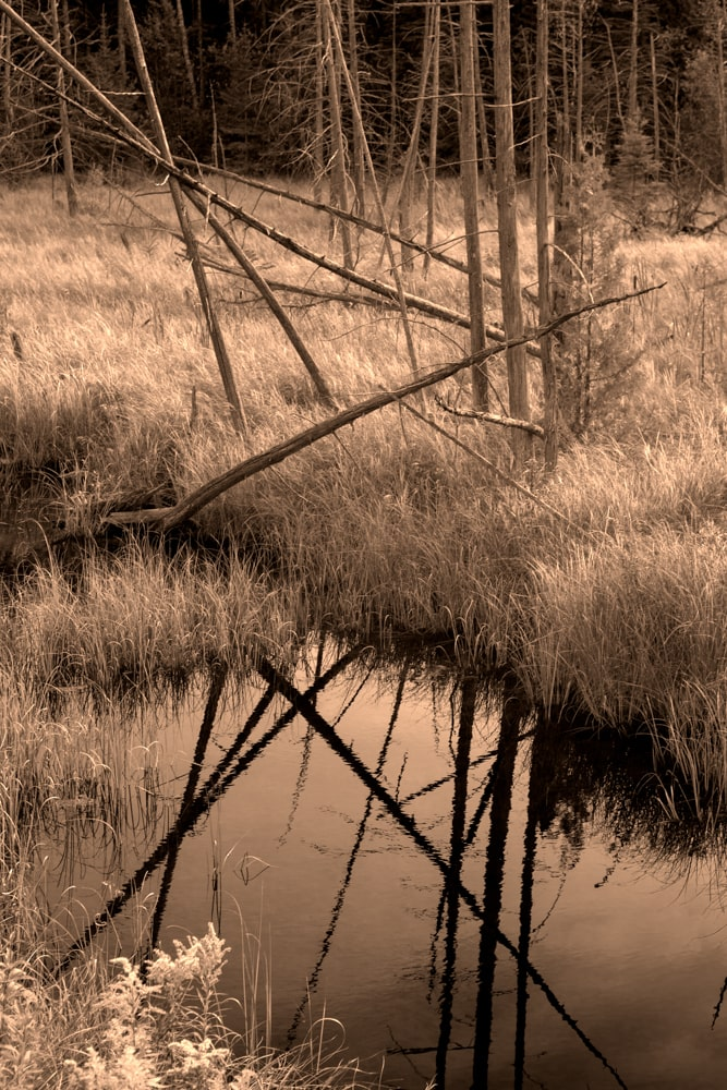 Sepia nature photography